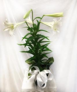 Easter Lily - Small