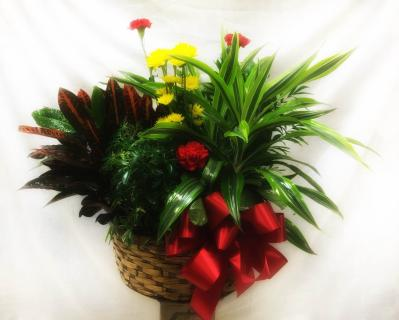Planter Basket* ($150)